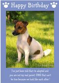"Jack Russell Terrier-Happy Birthday - ""I'm Adopted"" Theme"